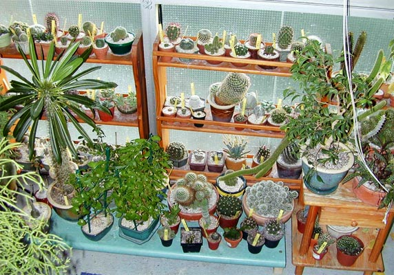 Indoor cacti colection
