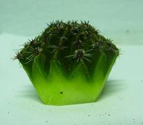 cacti propagation