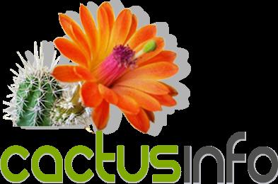 Cactus Info