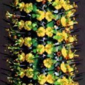 Euphorbia Baioensis
